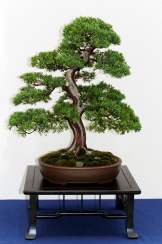 Bonsai_Remscheid_33