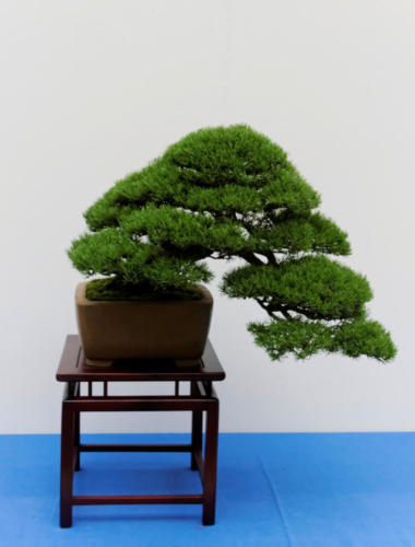 Bonsai_Remscheid_36