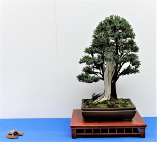 Bonsai_Remscheid_37