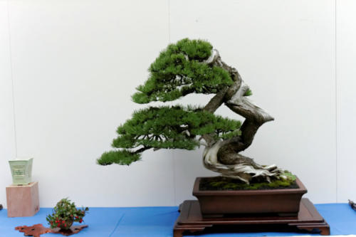 Bonsai_Remscheid_38