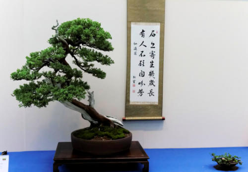 Bonsai_Remscheid_39