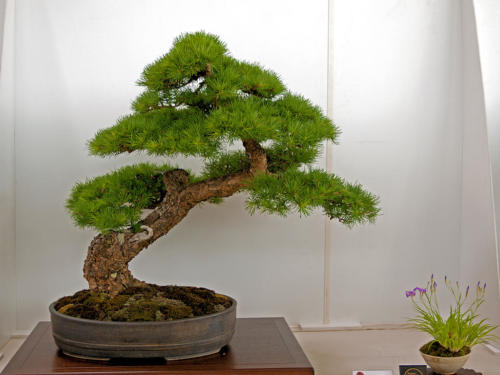 Bonsai_Remscheid_40