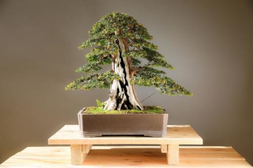 bonsai-3125720_1920